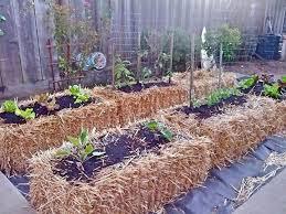 107 best straw bale gardening images on pinterest straw bale