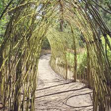 cape cod living willow dome u0026 tunnel u2014 living willow structures by