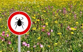 tips to avoid ticks in your yard and while enjoying the outdoors