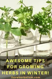 74 best indoor herb garden images on pinterest