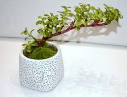 pot bonsai design du pot bonsai b u2013 casa febus u2014 home u2022 design