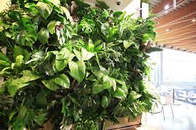 living wall plant selection livewall green wall system