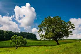 beautiful partly cloudy summer sky trees and farm fields stock