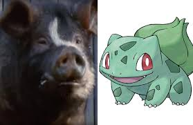 from bulbasaur to snorlax if the inhabitants of u0027animal farm