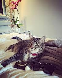 Cat Instagram The Rich Cats Of Instagram Thailand Tatler