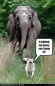 Elephant Meme - funny dog and elephant picture