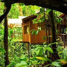the world u0027s 10 coolest treehouse hotels cbs detroit