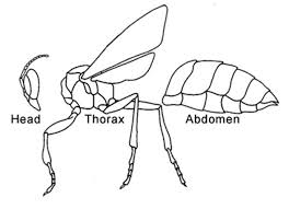 insects life cycle body parts usefulness to humans
