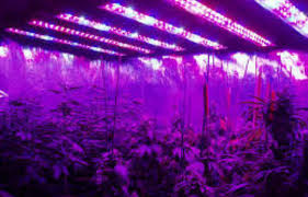proper lights for growing weed double your bud with led lights