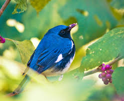 native plants of new york native plants for birds audubon new york