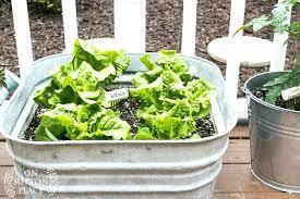 Outdoor Container Gardening Ideas Container Garden Vegetables Great Patio Vegetable Garden