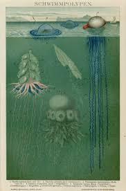 Jellyfish Home Decor 12 Best Octopus Jellyfish U0026 Squid Images On Pinterest Gift