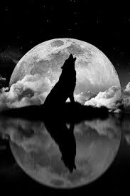 wolf howling at the moon sun moon wolf