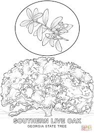 georgia state tree coloring page free printable coloring pages
