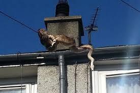 film ular phyton flonimal nesia ular phyton besar ini merayap melalui kabel rumah