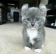 cat or koala album on imgur