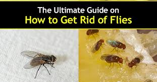 How To Get Rid Of Flies In The Backyard by Ultimate Guide How To Get Rid Of Flies 1 1200x628 Jpg