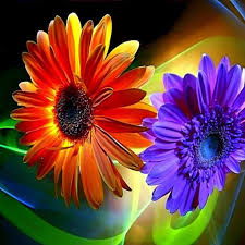 hd images of flowers 100 hd flawer flower petals close up shades pinterest