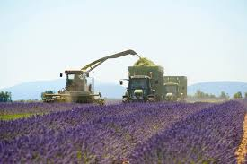 Parfum De Provence Agricultural Cooperative Corporation Of Perfume Plants Of Provence