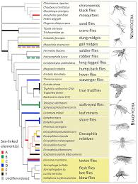 plos biology numerous transitions of chromosomes in diptera