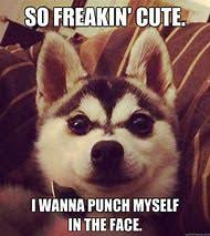 So Cute Meme Face - best 25 ideas about cute memes find what you ll love