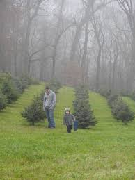 green acres christmas tree farm home design inspirations