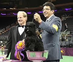 affenpinscher westminster 2015 for this westminster best in show judge it was memorable 20 month