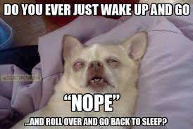 Sleepy Meme - sleepy meme
