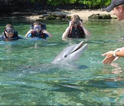 go swimming with dolphins at hilton waikoloa village