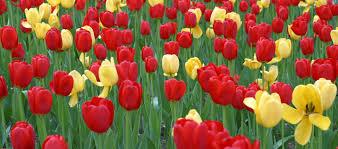 fertiliser for native plants fertilisers online mineral u0026 organic fertilizers u0026 pesticides in