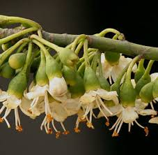 yucatan flora mayan forest and mayan sacred trees fruits