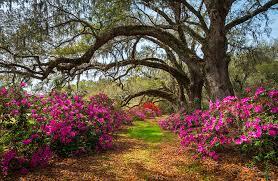 South Carolina landscapes images Charleston sc spring flowers scenic landscape south carolina jpg