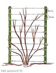 trellis ideas for vines solidaria garden