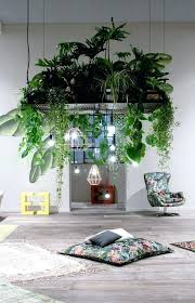 decorative indoor plants indoor plant decoration ideas ad amazing ideas for indoor plants