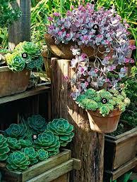 84 best succulent garden ideas images on pinterest gardening