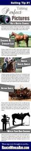 best 25 pictures of horses ideas on pinterest horses gray