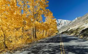 Colorado Fall Colors Map by America U0027s Best Drives For Spotting Changing Leaves Travel Leisure
