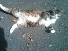 cat memorial cat memorial thug from pasadena