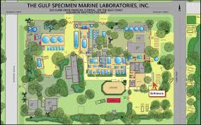 plan your visit gulf specimen marine lab