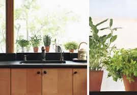 plante de cuisine les plantes aromatiques au potager