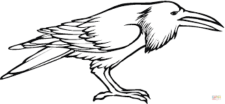raven bird coloring free printable coloring pages