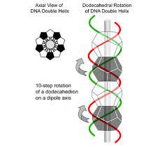 golden ratio dna spiral harmonic evolution part 1