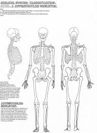 human skeleton coloring pages corpedo com