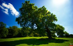 widescreen green tree hd new images with nature trees backgrounds