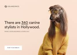 afghan hound art emporium best place to chill just over the hill skinny u0027s lounge bars