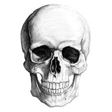 how to draw a skull drawing of side view of skull drawing skull