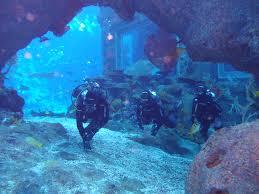 ocean dome archives marine life park blog an rwscoop blog