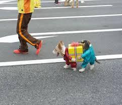 Treasure Chest Halloween Costume 8 Dog Halloween Costumes Internet