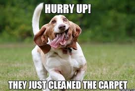 Carpet Cleaning Meme - carlo s carpet cleaning home facebook