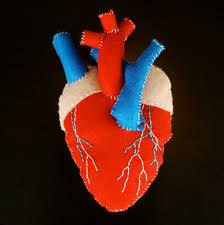 custom listing for vitality11107 anatomical heart by eeebeedee